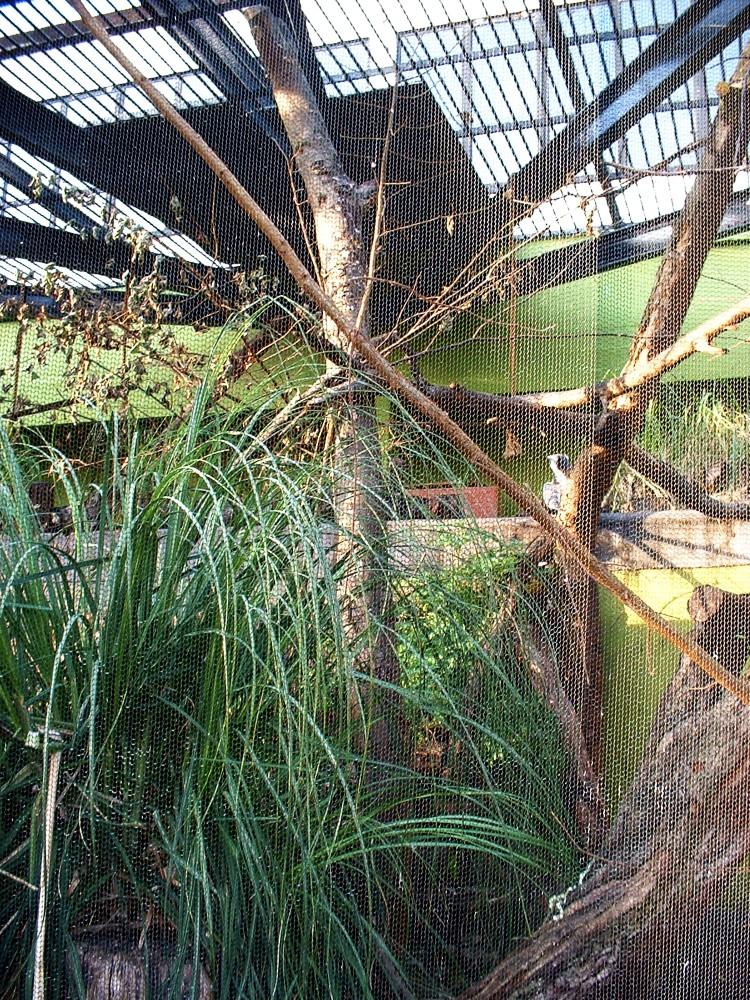 Casa de gorilas del Zoo de Londres
